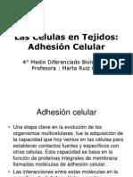 Adhesio-n Celular 4° Dif.