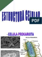 5 Estructura Celular