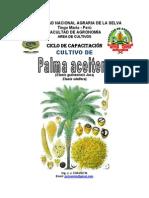 Palma Aceitera AGRO UNAS
