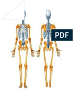 Doc1 Anatomia (2) Correcto Lala