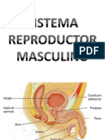 Clase de Sistema Reproductor Masculino