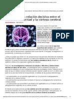 Establecen una relación decisiva entre el cociente intelectual y la corteza cerebral