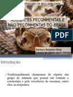 SERPENTES PEÇONHENTAS E NÃO PEÇONHENTAS DO BRASIL