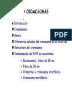 1122. Genes y Cromosomas
