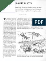 Ants Slavery
