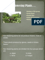 Non Flowering Plants (Science)