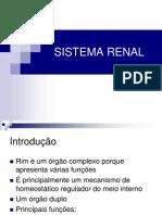 Sistema Renal7