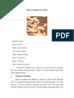mikrobio bakteri