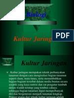 Contoh Bio Kultur Jaringan