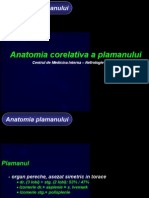 Anatomia Plaman