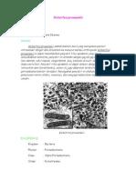 rickettsia-prowazekii.pdf