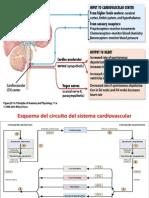 Circulatorio 20140