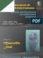 Cortes histológicos de embriones humanos (2)