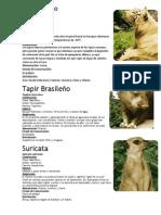 Tigre Blanco.docx