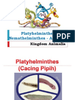 Kingdom Animalia Vermes