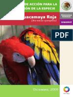 Guacamaya Roja 1 (1)