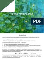 Rutas metabólicas.pptx