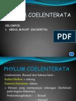 PPT Coelenterata.ppt