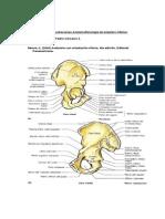1 Guia Láminas Anatomia miembro inferior