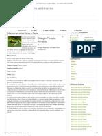 Informacion Sobre Ranas y Sapos _ Informacion Sobre Animales