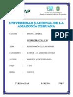 BIOLOGÍA GENERAL N° 09 REPRODUCCION CELULAR MITOSIS