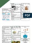 65370899-Print-Leaflet-Tumbuh-Kembang-Anak-Dan-Balita.doc