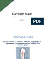 morfologapulpar-101001210154-phpapp01