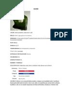 Olivino1 - Copia