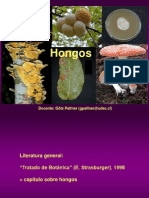 hongos-i-1210718496285803-8
