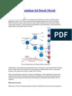 Proses Pembentukan Sel Darah Merah eritropoiesis.docx