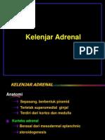 Adrenal Lida