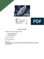 Labyrinthomorpha