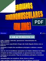 MERIDIANOS TENDINO MUSCULARES