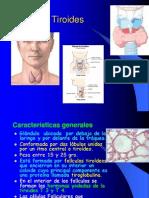 Tiroides y Pancreas