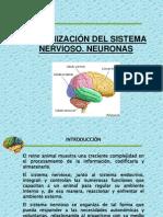Organizacion Del Sistema Nervioso Central v3