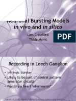 neuronal bursting models in vivo and in silico