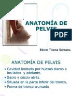 Anatomía de pelvis