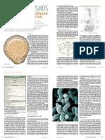 MICROORGANISMOS CAUSADORES DE DOENÇAS DE ORIGEM ALIMENTAR