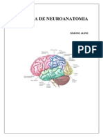 APOSTILA NEUROANATOMIA