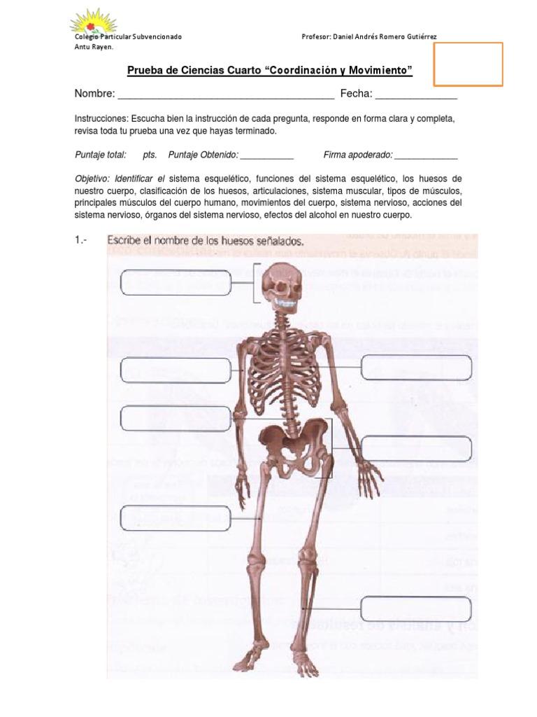 Magnífico Anatomía Y Fisiología Quizzes Sistema Esquelético Molde ...