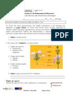 Ficha de trabalho 10 Estudo dos órgãos da videira Flor