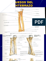 Huesos Del Antebrazo