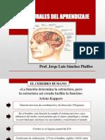 Bases Neurales Del Aprendizaje Final