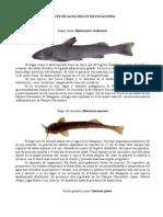 Peces de Agua Dulce de Patagonia (1)