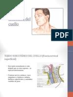 Fascias y músculos del cuello