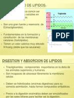 Metabolismo de Lipidos (1)