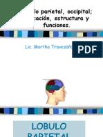 3.3 - Lobulo Parieto Occipital