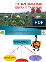pengendalian hama dan penyakit jagung