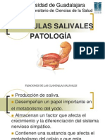 Glandulas Pato