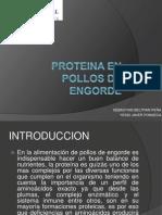 Proteina en Pollos de Engorde